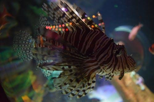 갈색 벗겨진 물고기, 물고기의 무료 스톡 사진