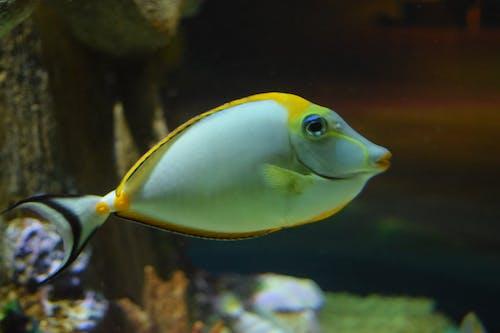 노란 물고기, 물고기의 무료 스톡 사진