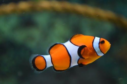 물고기의 무료 스톡 사진