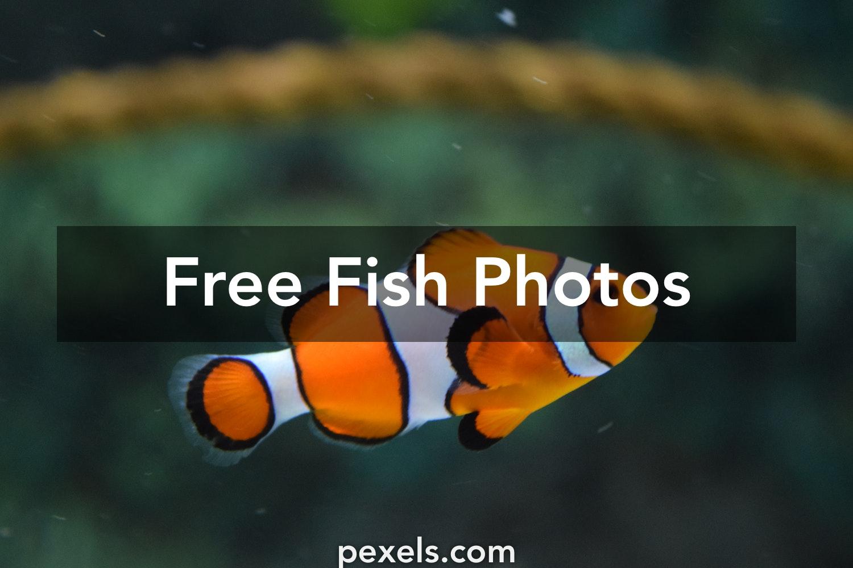 257 Amazing Fish Photos · Pexels · Free Stock Photos