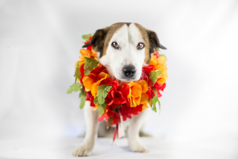 Closeup Photo of Adult Medium Size Dog