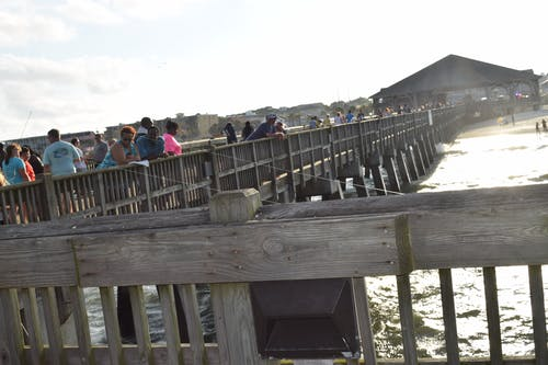 남부 타이베이, 사바나, 타이비 비치 사바나의 무료 스톡 사진