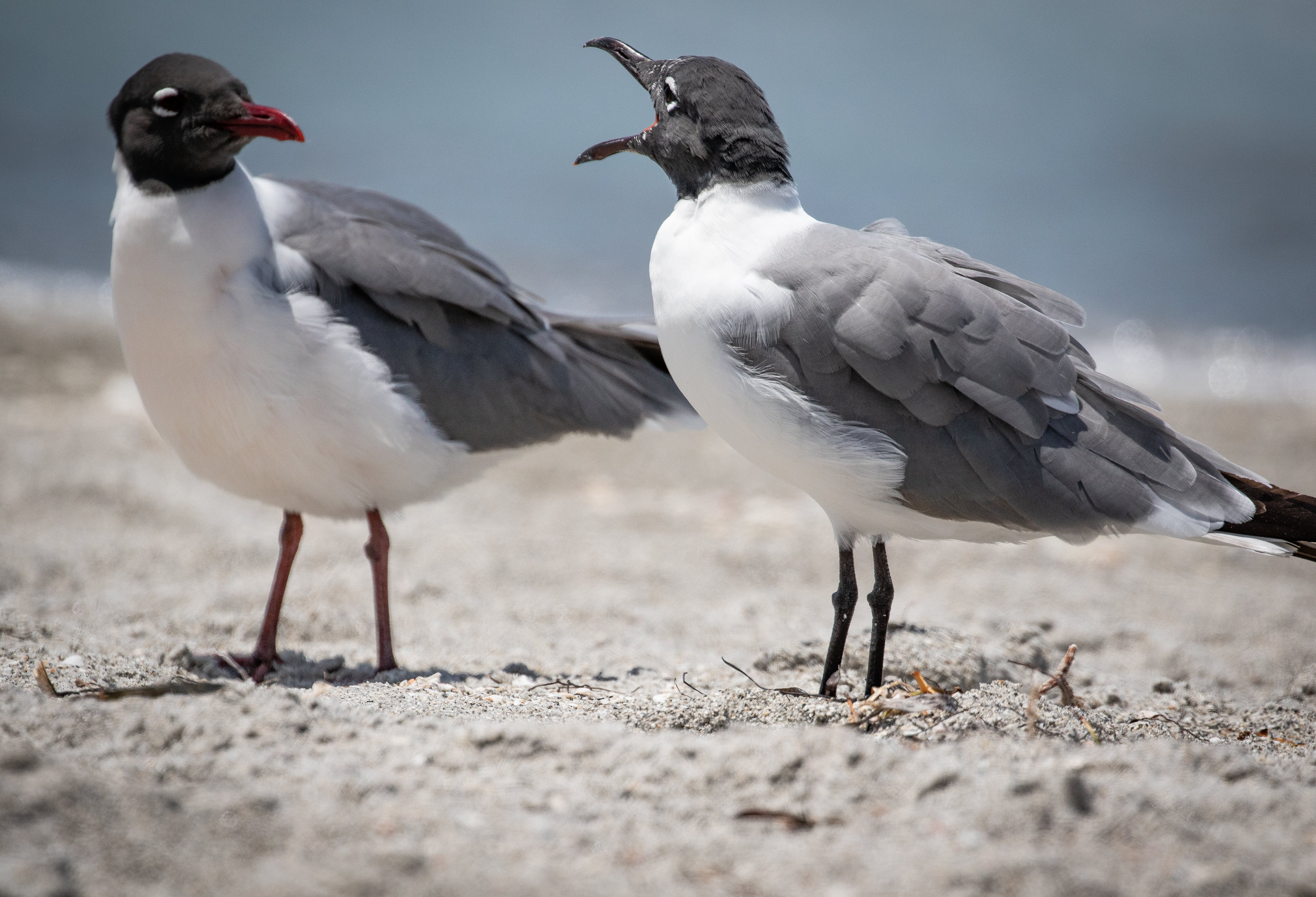 Two Black and White Birds