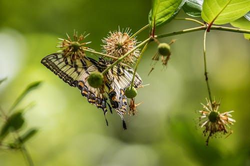 Бесплатное стоковое фото с бабочка, беспозвоночный, Биология, дневное время