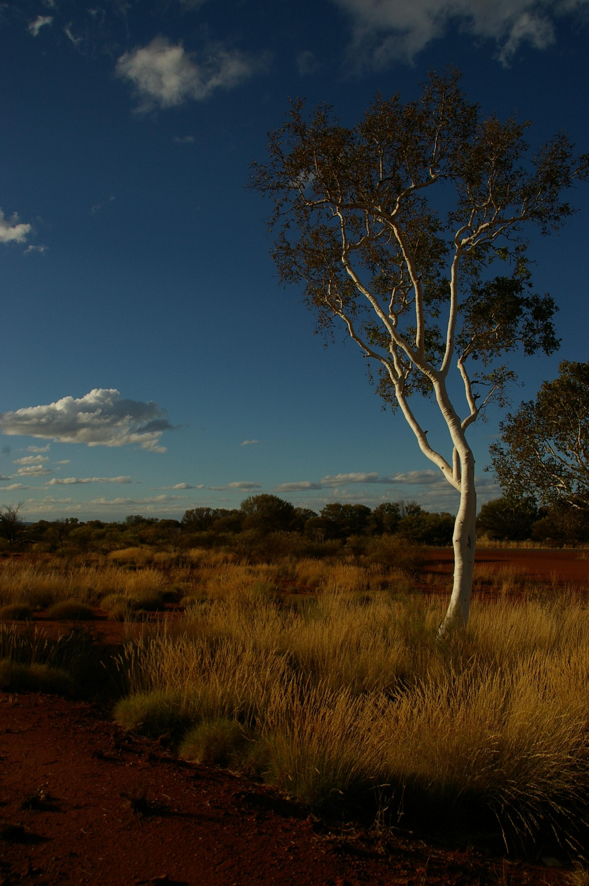 Image result for pexels australian environment