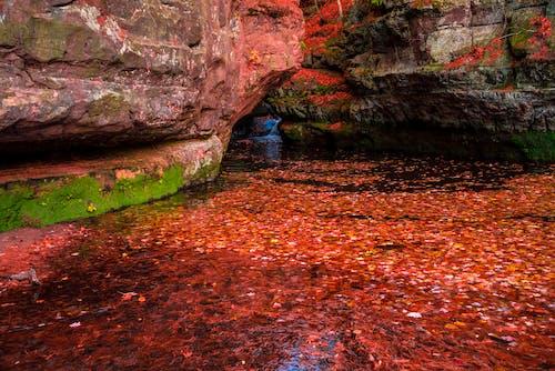 岩石, 楓葉, 水, 池塘 的 免費圖庫相片