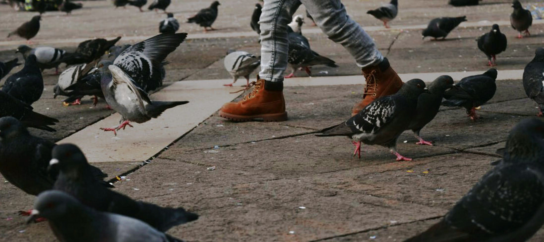 Free stock photo of baby feet, baby foot, bird, child