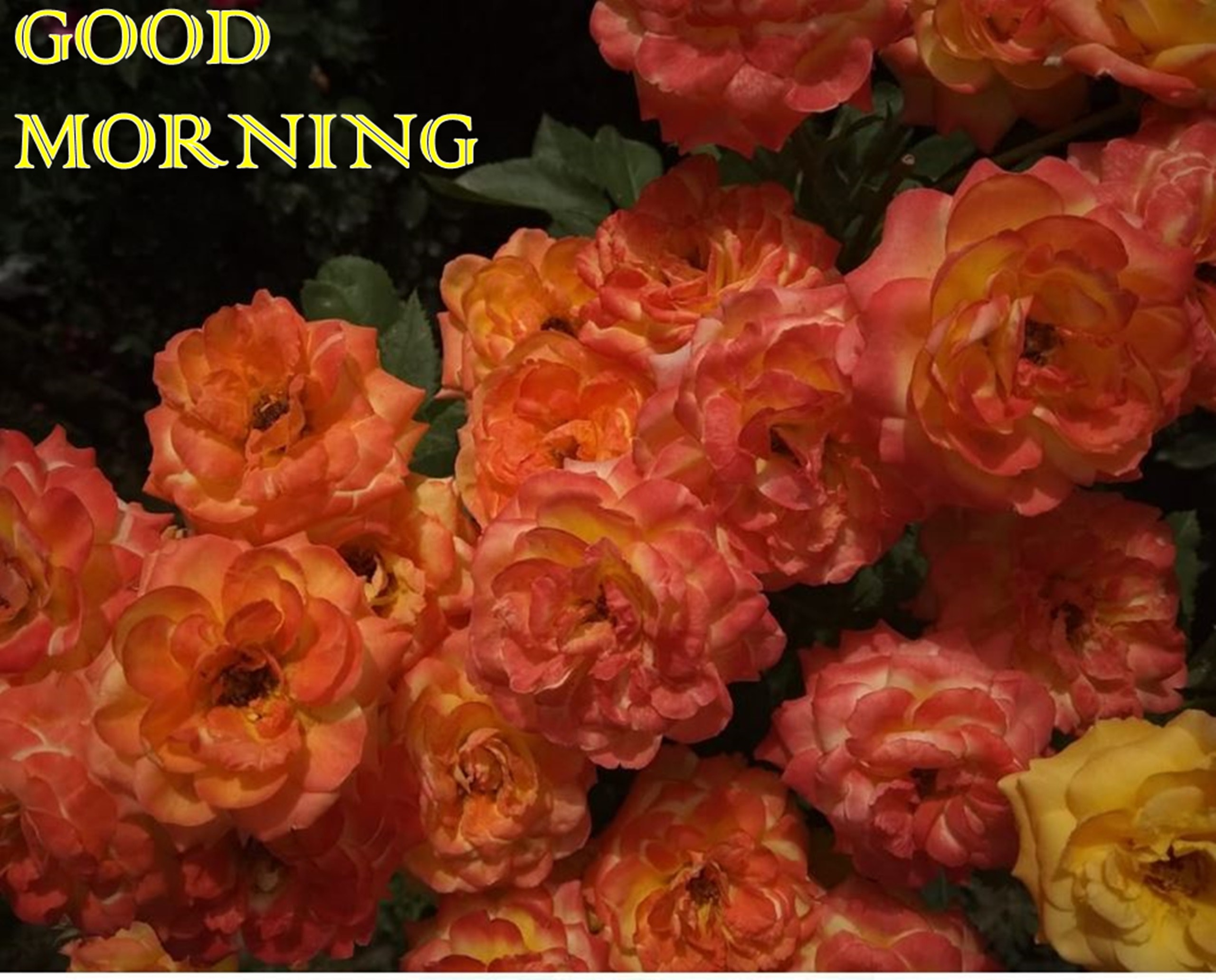 Free Stock Photo Of Flowers Garden Good Morning