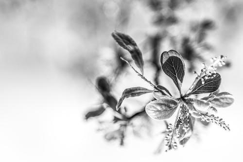 Gratis arkivbilde med blomst, natur, svart