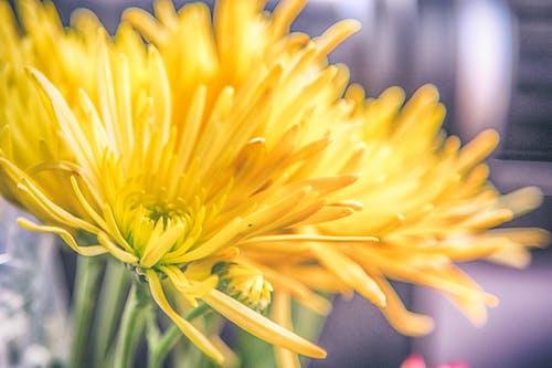 Gratis arkivbilde med anlegg, blomst, gul, makro