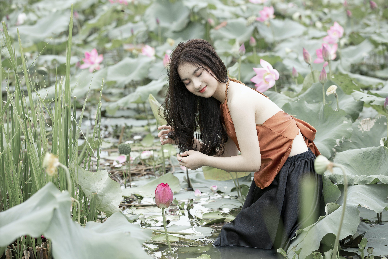 Free stock photo of st, Vietnam's lotus