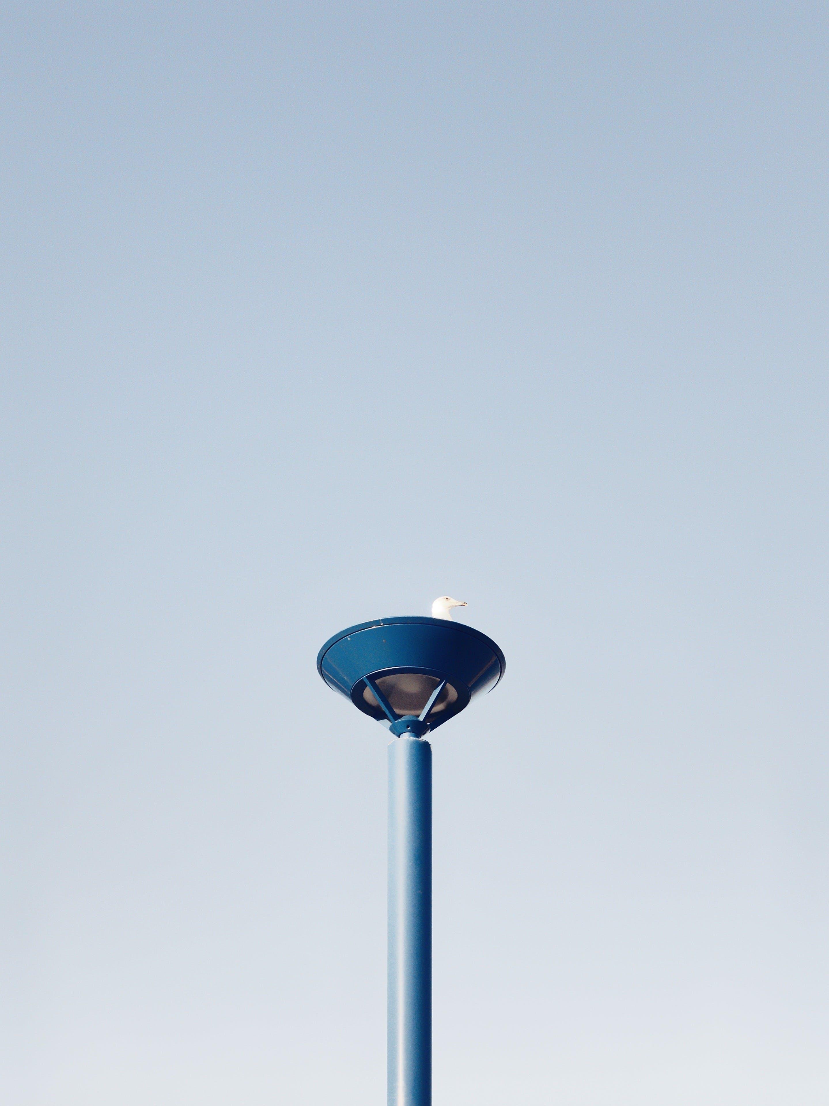 Základová fotografie zdarma na téma denní světlo, jasný, lampa, lehký