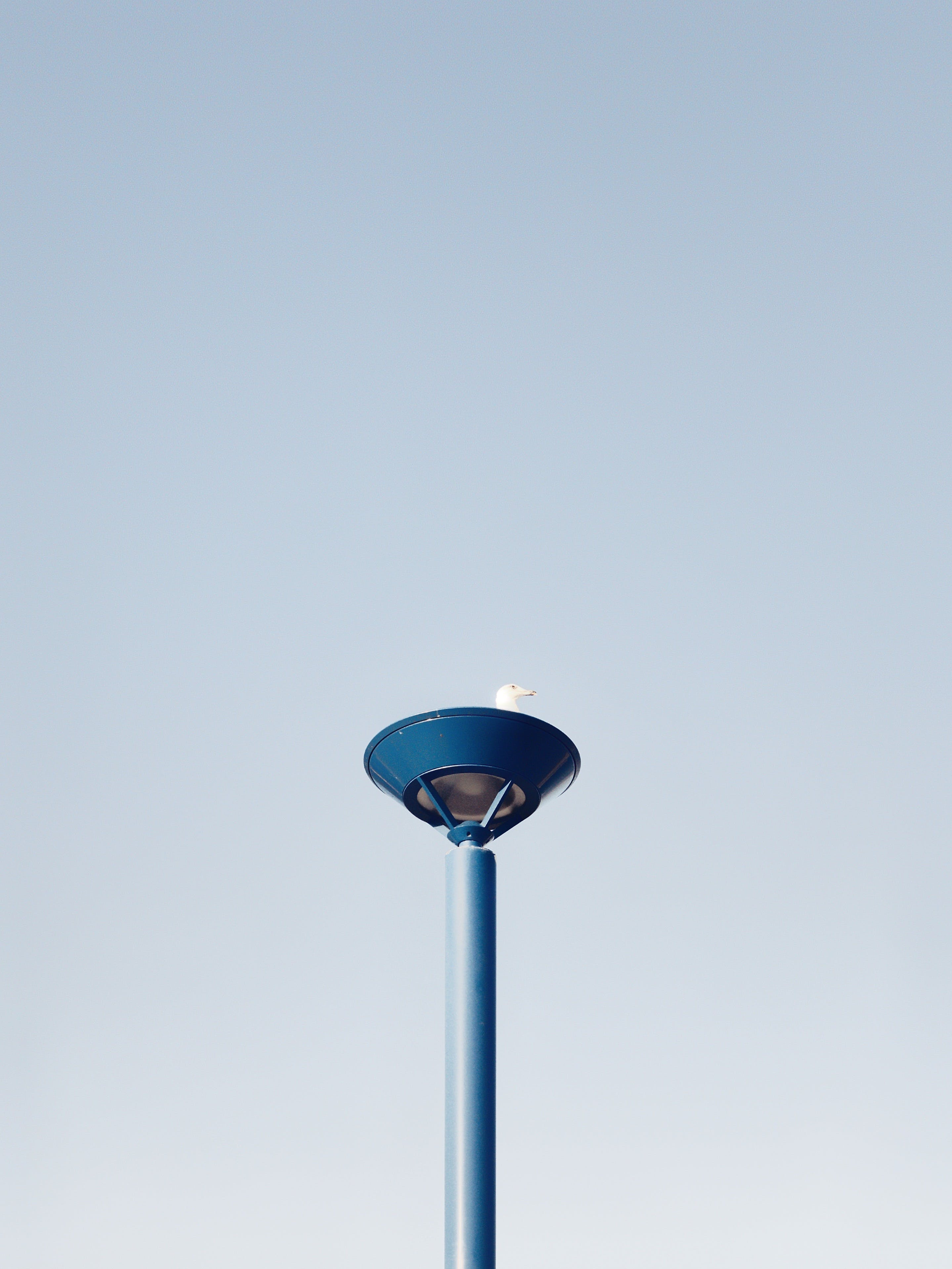Low Angle Photo of Ring-billed Gull Perching on Blue Metal Stand