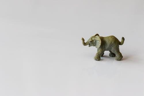 Бесплатное стоковое фото с вид сбоку, дикая природа, дикий, животное