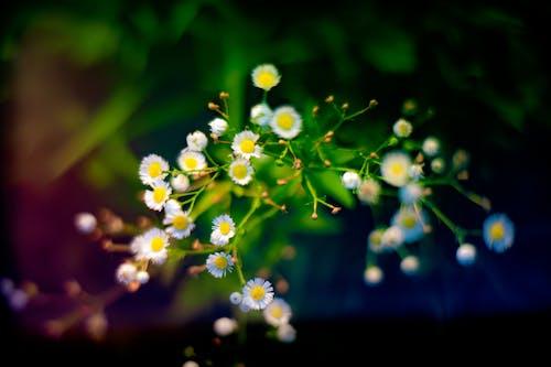 Ảnh lưu trữ miễn phí về cỏ, hệ thực vật, hoa, màu