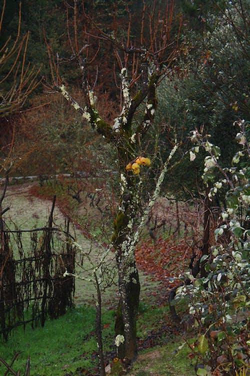 Бесплатное стоковое фото с деревья, природа