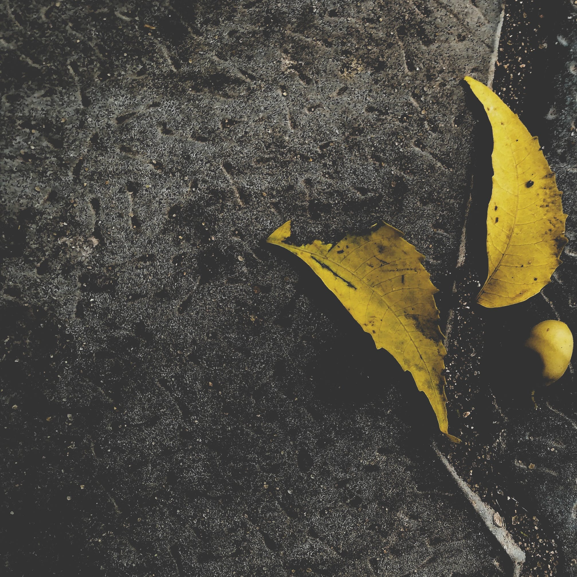 Free stock photo of black background, close up shot, yellow colour