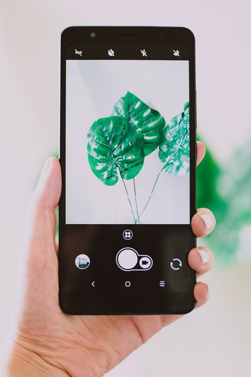 Person Holding Black Android Smartphone Taking Photo of Green Leaf Plant
