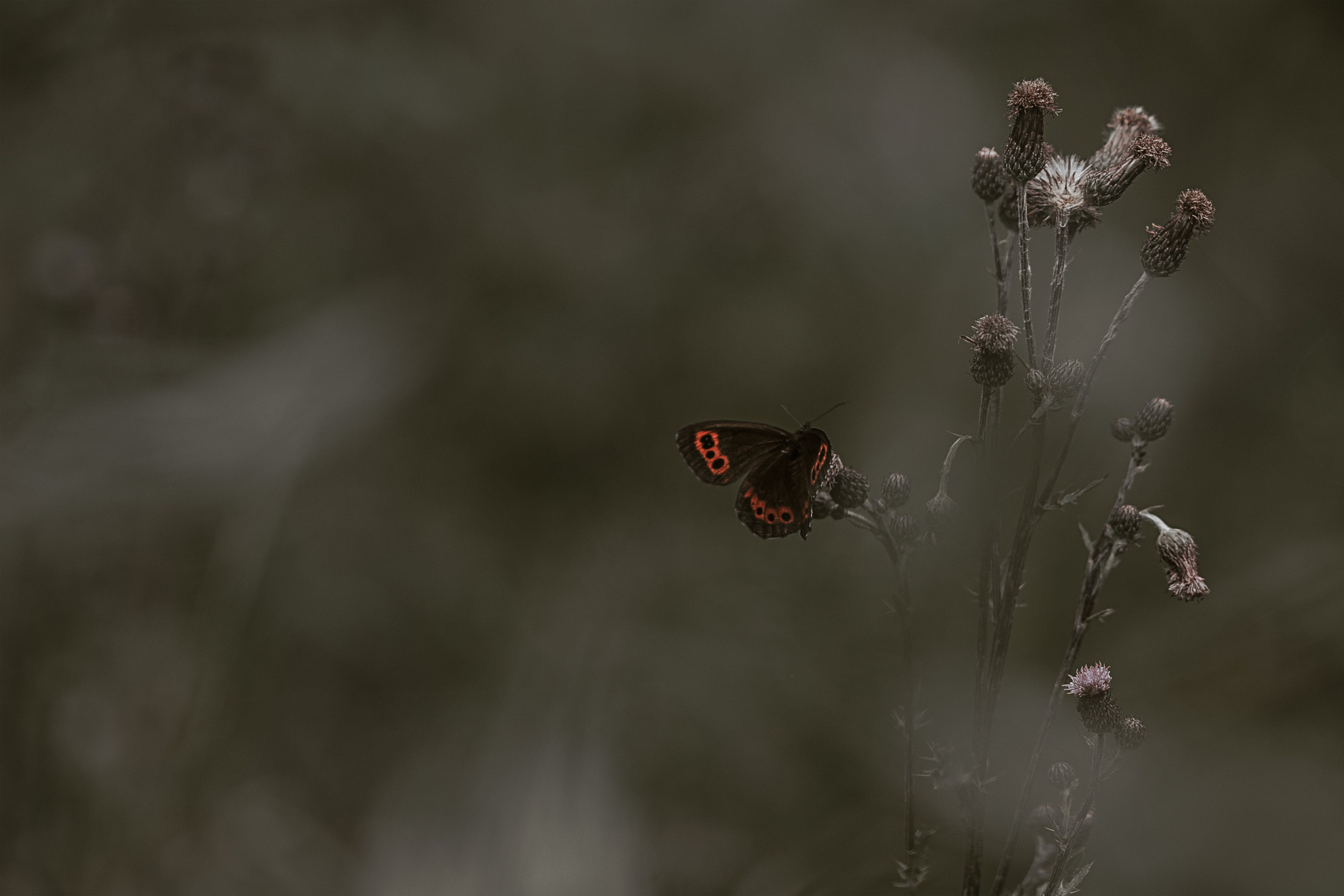 Red Admiral Butterfly Perching on Flower