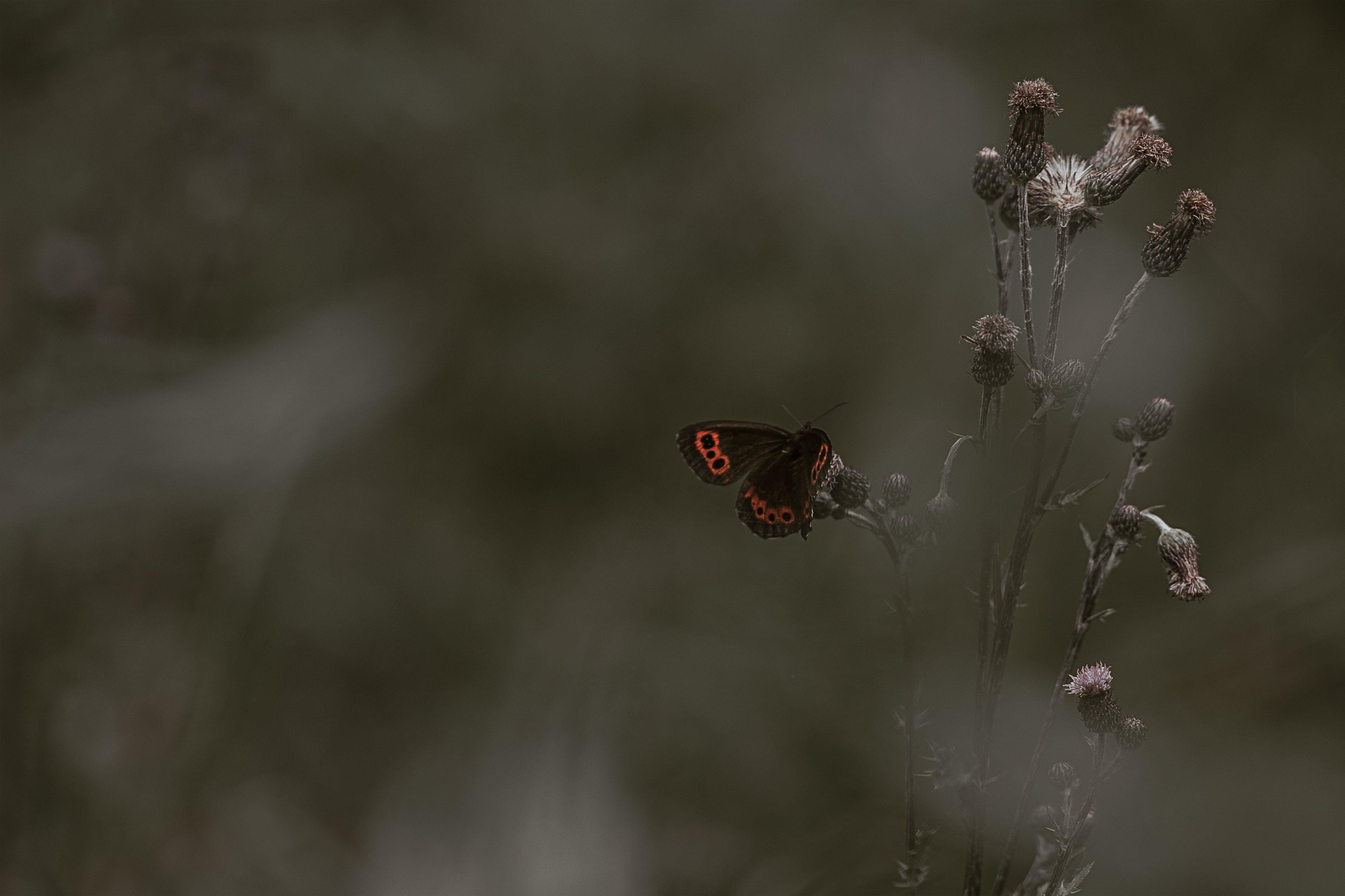 คลังภาพถ่ายฟรี ของ กลางวัน, ดอกไม้, ธรรมชาติ, ผีเสื้อ