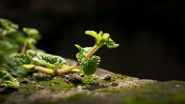 Free stock photo of garden plant, green, india, macro photography
