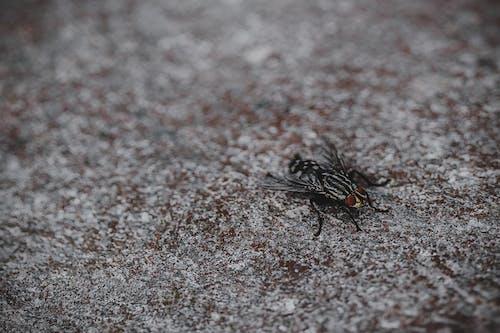 Close Up Photo of Black Horsefly