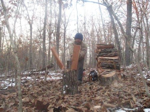 Immagine gratuita di alberi, autosufficienza, foresta, homesteading