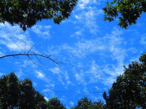 Immagine gratuita di alberi, cielo azzurro, foresta, natura