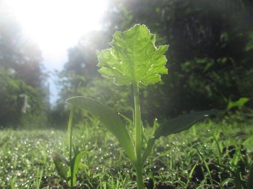 Immagine gratuita di agricoltura, autosufficiente, durante la preparazione, fagiolo verde