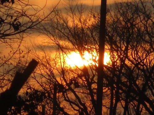 Immagine gratuita di alba, natura, ozarks