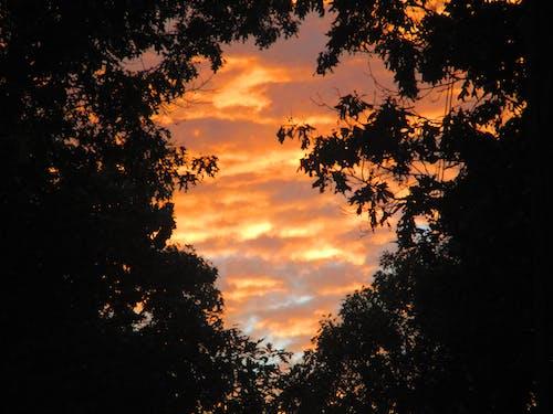 Immagine gratuita di cielo, foresta, nuvole, ozarks