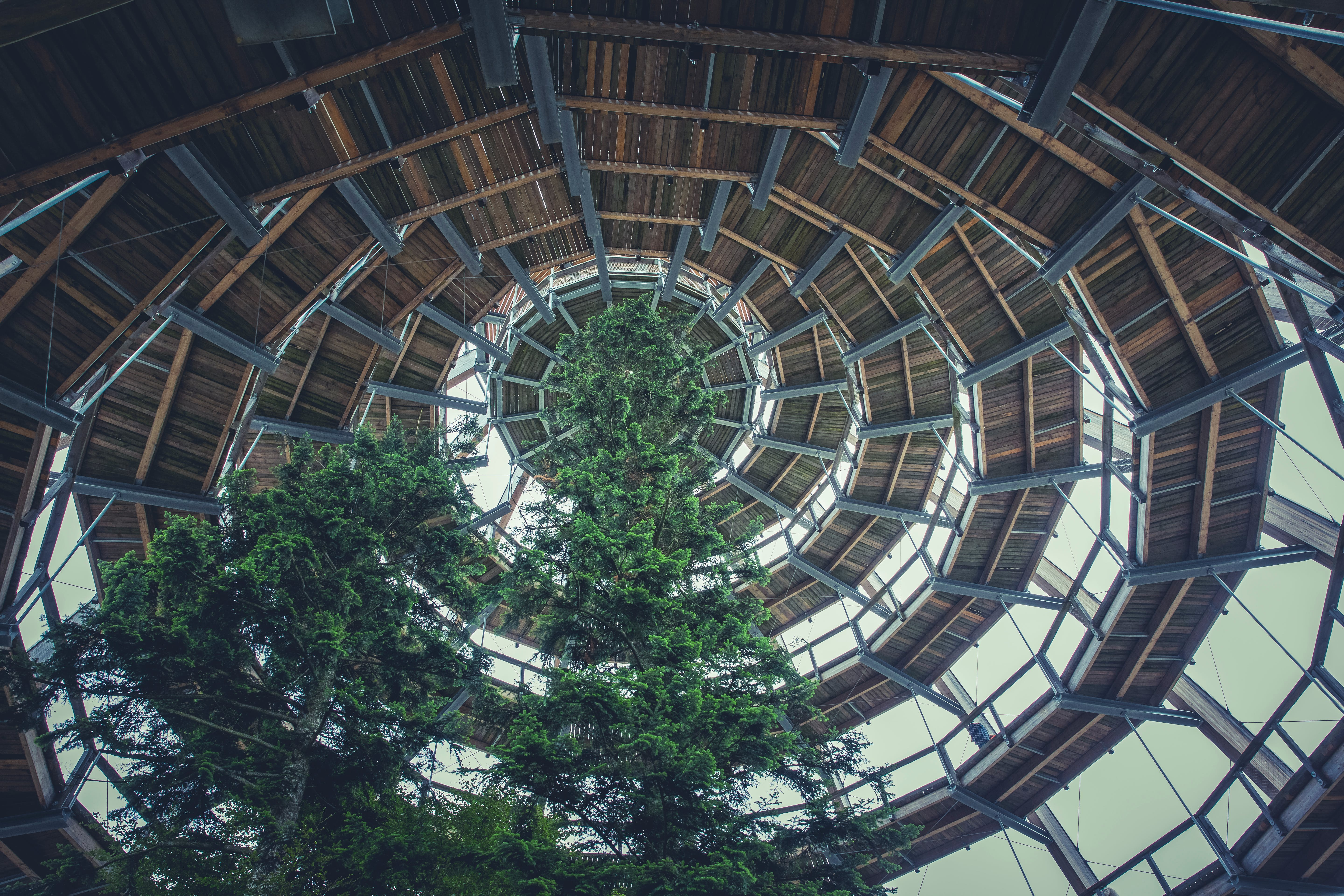 Brown Wooden Spiral Dome Building With Green Tree