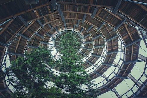 ağaç, ağaç tepesi, ağaçlar, ahşap içeren Ücretsiz stok fotoğraf