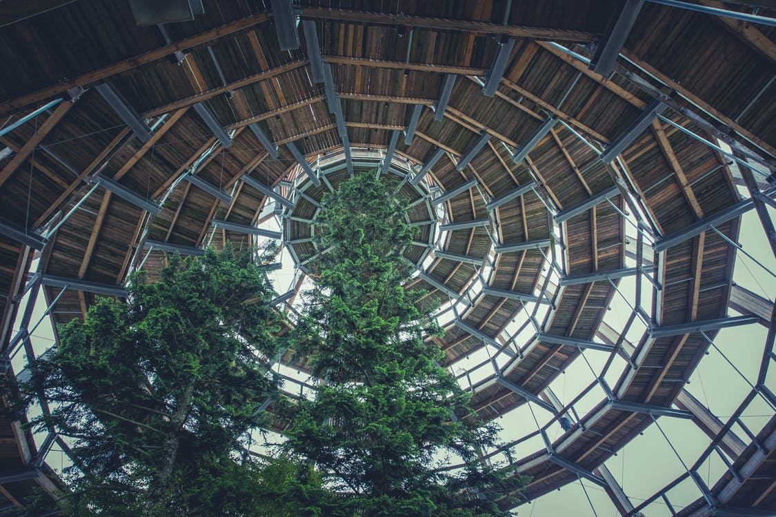 Green Tree Under Brown Roof
