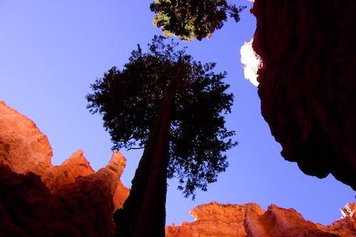 Kostenloses Stock Foto zu bäume, canyon, hoch schauen