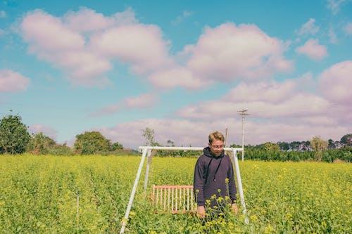 Imagine de stoc gratuită din câmp, creștere, fermă, iarbă