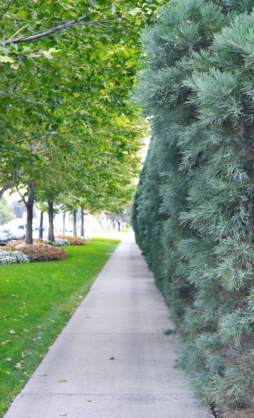 Free stock photo of plants, sidewalk, walkway