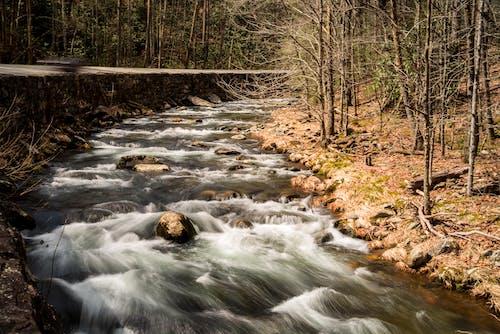 Δωρεάν στοκ φωτογραφιών με θαυμάσιο βουνό εθνικό πάρκο, νερό, ρεύμα., σπεύδουν