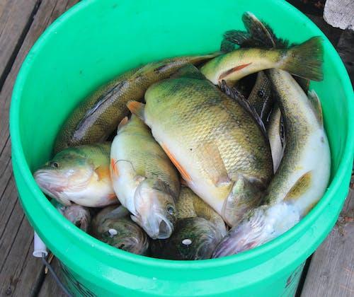 Δωρεάν στοκ φωτογραφιών με αλιεία, κάδος, μίζερη, πιάνω