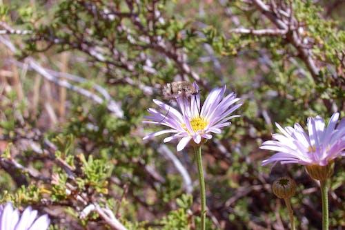 Gratis arkivbilde med bie, blomst, grand canyon