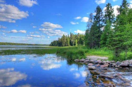 Δωρεάν στοκ φωτογραφιών με γραφικός, δέντρα, κεφαλόβρυσο, λίμνη itasca