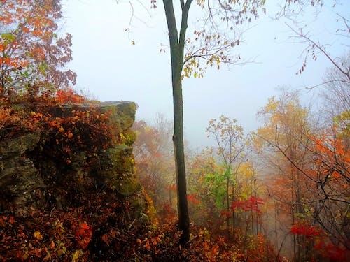 Δωρεάν στοκ φωτογραφιών με δασικός, δέντρα, ομιχλώδης, πολύχρωμος