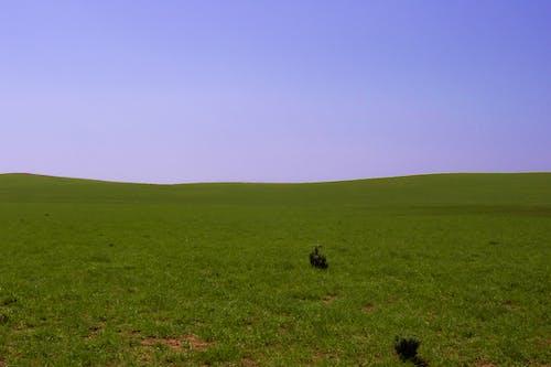 Gratis arkivbilde med åker, blå himmel, gress, grønt gress