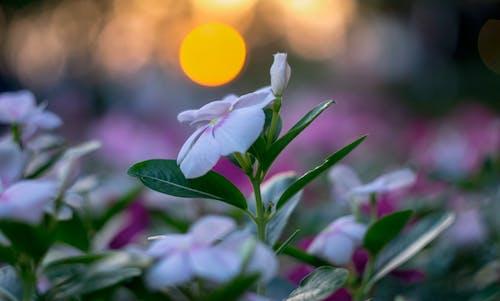 Fotos de stock gratuitas de #sun #flor