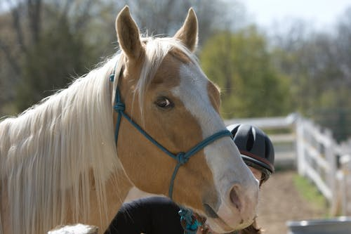 Gratis arkivbilde med hest
