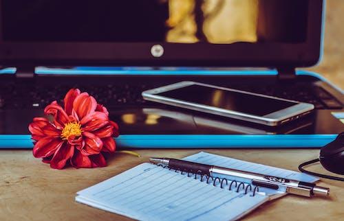 Gratis stockfoto met beeld, bestand, bloem, computer