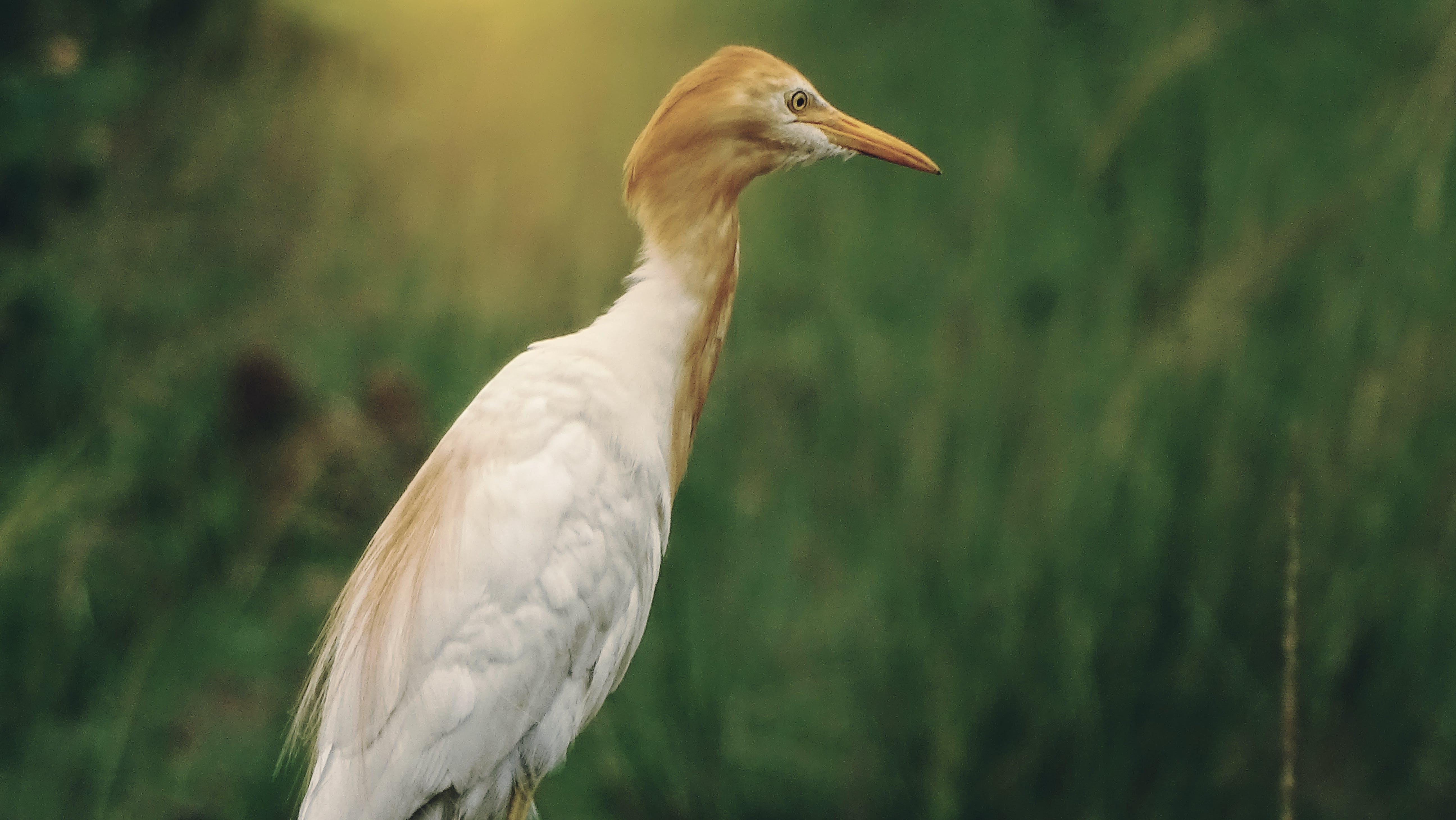 Free stock photo of beak, bird, close up, closing