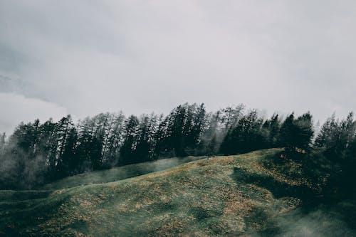 Δωρεάν στοκ φωτογραφιών με βουνό, γρασίδι, γραφικός, δασικός