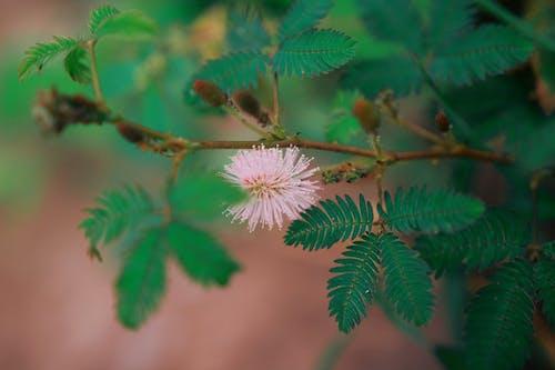 Foto profissional grátis de aumento, botões de flores, brilhante, close