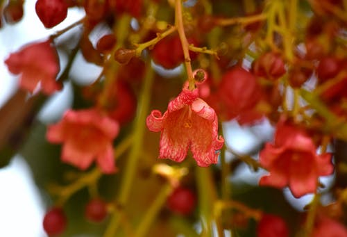 flame_flowers, flame_tree, 花 的 免費圖庫相片